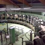 UE mantiene alto el ritmo de producción de leche