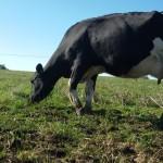 Se concretó rebaja de IMEBA para lecheros