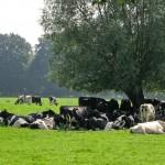 Brasil: precio de leche pago al productor cayó en setiembre tras siete meses de subas