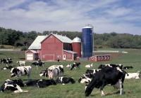 producción de leche EEUU