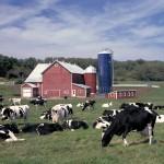 USDA volvió a elevar su estimación de producción de leche para EEUU en 2017