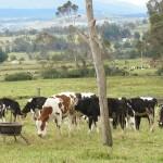 Precio de leche al productor en Brasil volvió a caer en julio