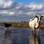 Gremial argentina advierte que faltará leche y precios subirán