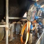Precio de leche al productor en marzo fue el más alto de los últimos tres años