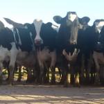 Gobierno convocó a Mesa sectorial para evaluar impacto del conflicto en transporte de lácteos