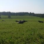 Remisión de leche a planta subió 4% en el primer bimestre