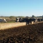Se desarrollará proyecto para impulsar la industria lechera a escala familiar en el litoral Norte